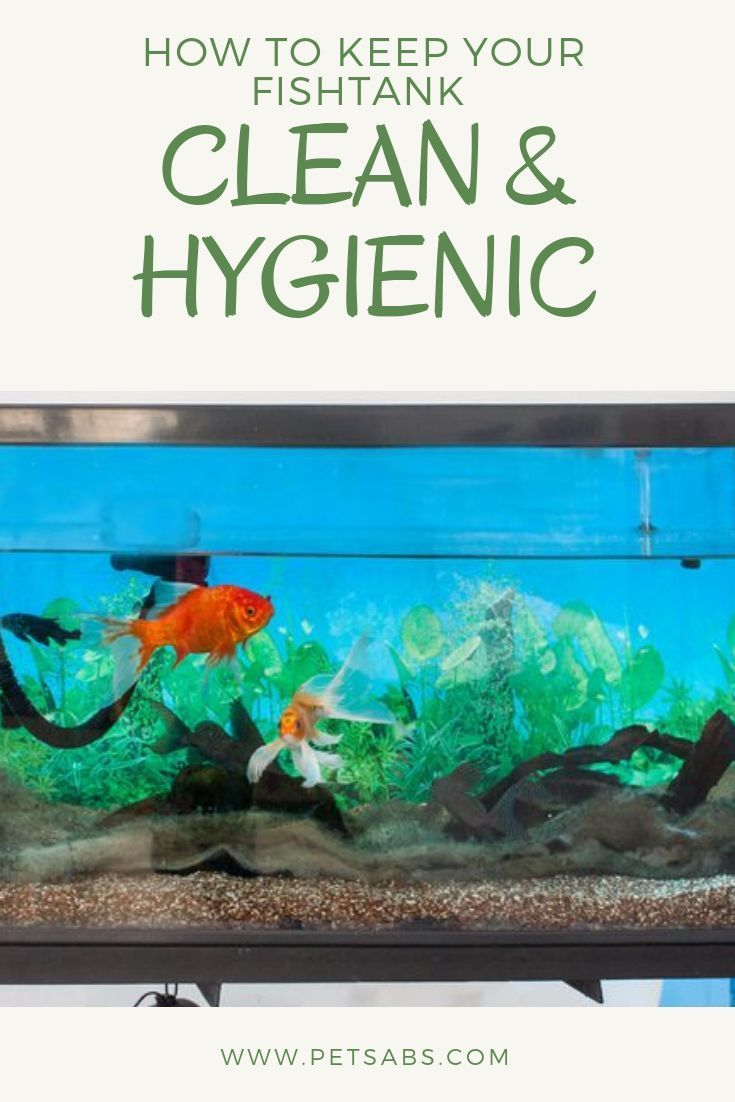 How To Keep Your Fish Tank Clean And Hygienic Fish Tank Cleaning Fish Tank Tropical Fish Tanks