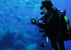Scuba diving in Arrábida #Portugal