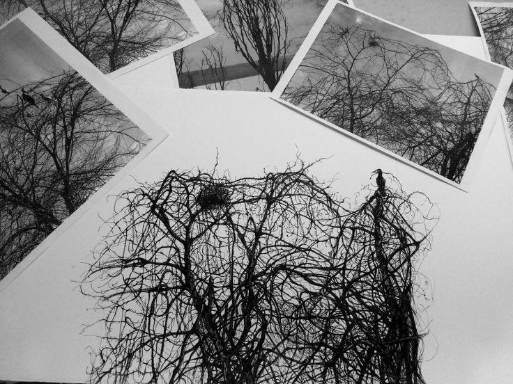 El Coloquio de los pájaros dibujos a tinta china s/ papel Zerkall