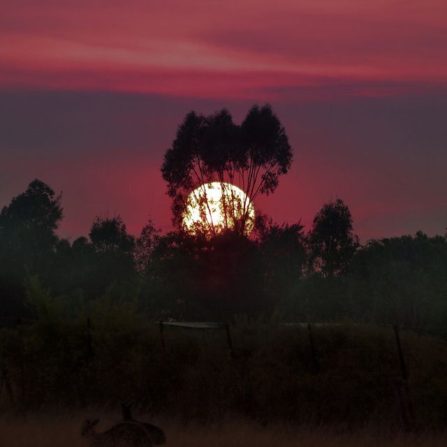 Sun Rising Over the Outback | Flickr - Photo Sharing!