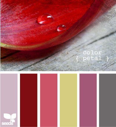 Color petal