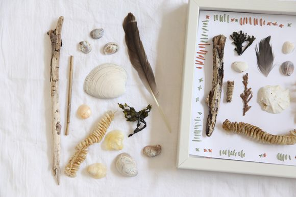 DIY Beach Specimen Shadow Box