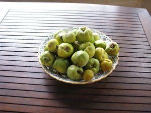 Nalewka z Pigwy (eng: quince)