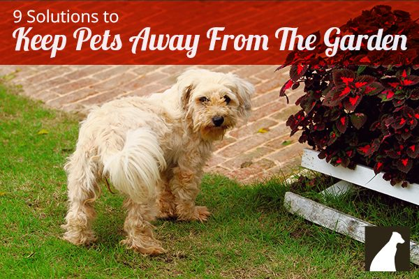 Keep Dogs And Cats Out Of Your Garden With These 9 Tricks Dogs Pinterest Gardens Cats