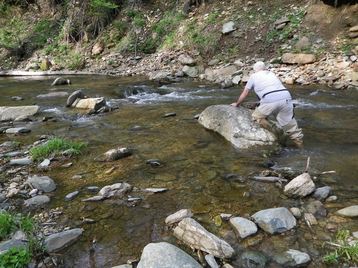17 best images about learn to fly fish on pinterest for Shenandoah national park fishing