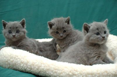 Really cute kittens!!!