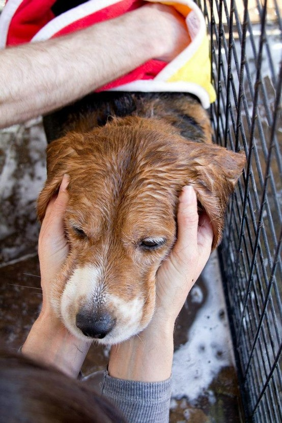 This was Abe's first bath! He was not an easy customer, but while shampooing him we tried to be as affectionate as possible (Thanks Kelle!).