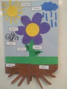 27 besten Plants bulletin board Bilder auf Pinterest | Aktivitäten ...