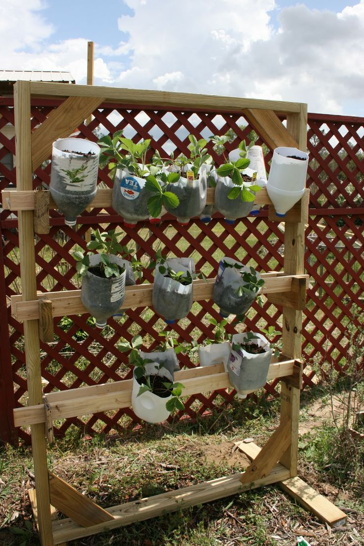 How To Plant Strawberries In A Small Strawberry Pot