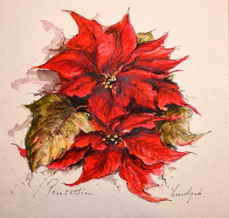 523 Best Images About Flowers: Poinsettia On Pinterest