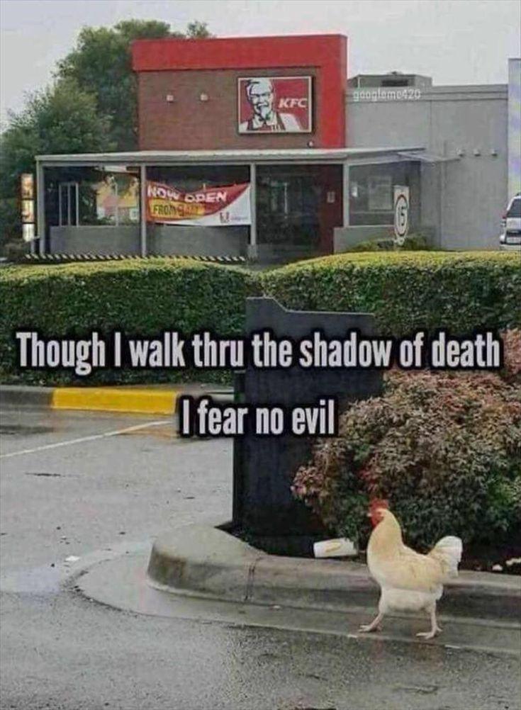 17 lustige Tier-Meme, die dich zum Lachen bringen