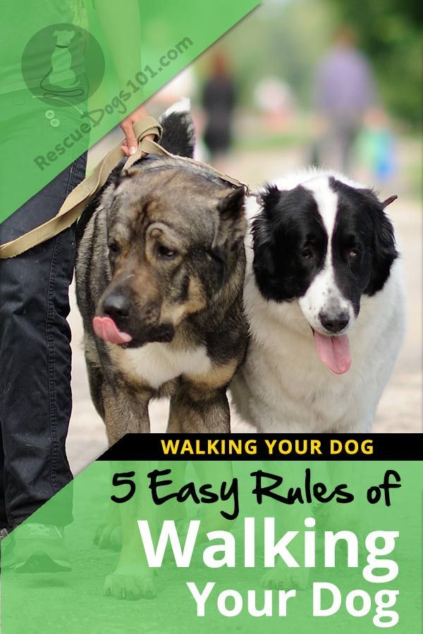 5 Rules Of Walking Your Dog Etiquette Did You Know There Are 5
