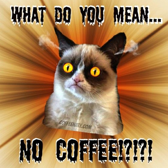 The source of #GrumpyCat's grumpieness. #coffee Sell Luwak Coffee and Other Types of Coffee. 100% Original. Ship Worldwide. Rsvp: Mr. Ari Gusti. M +62881 942 85 92 (SmartFren). BlackBerry PIN 31C05915. Your inquiry will brighten our days, along with a cup of coffee!
