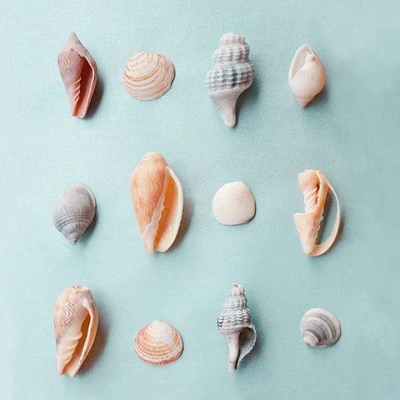 Shells from the Australian beach