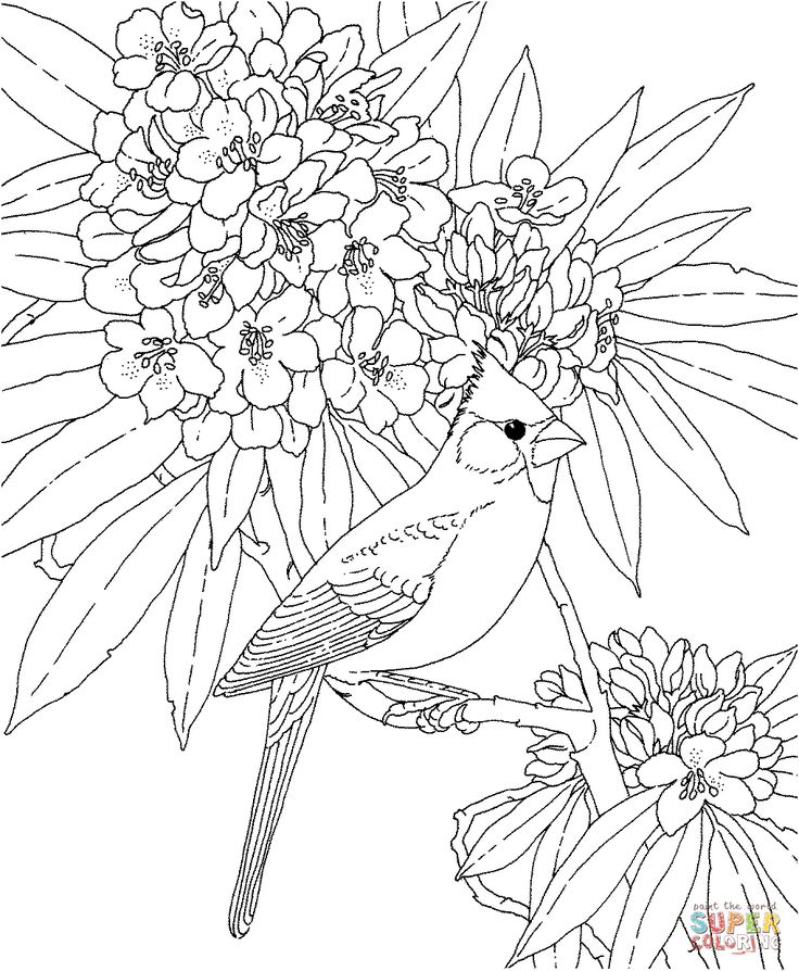 Cardinal And Rhododendron West Virginia Bird Flower Coloring Page From Azalea Category Select 24848 Printable Crafts Of Cartoons Nature Animals