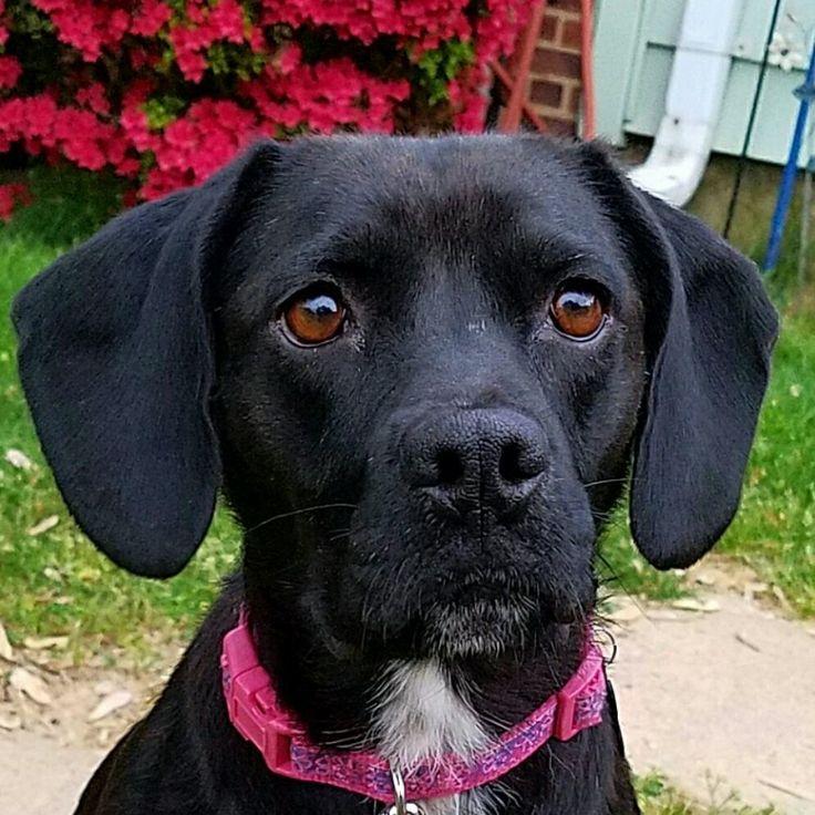 Operation Paws for Homes NOVA Pet Adoption