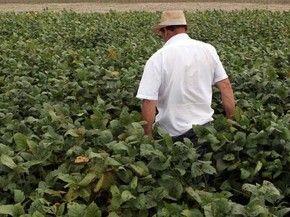 Produção da soja cresceu e contribuiu para resultado positivo da agropecuária. (Foto: REUTERS/Paulo Whitaker)
