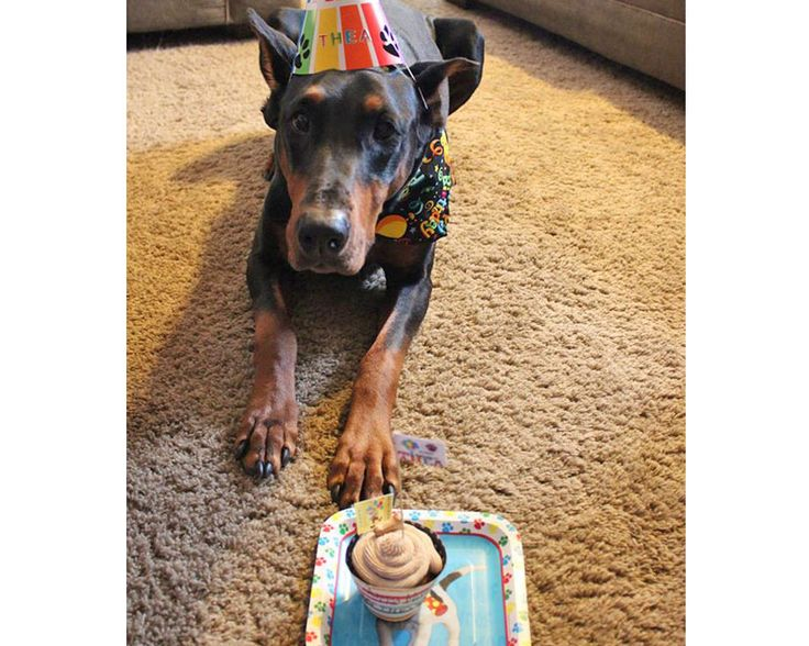 17 Best Ideas About Puppy Birthday Cakes On Pinterest