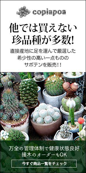 多肉植物の増やし方について~「挿し葉」「挿し芽」の方法と注意点~   サボテン販売のcopiapoa スタッフブログ