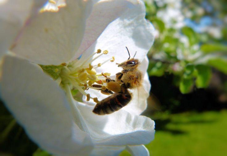 The Pollinator - null