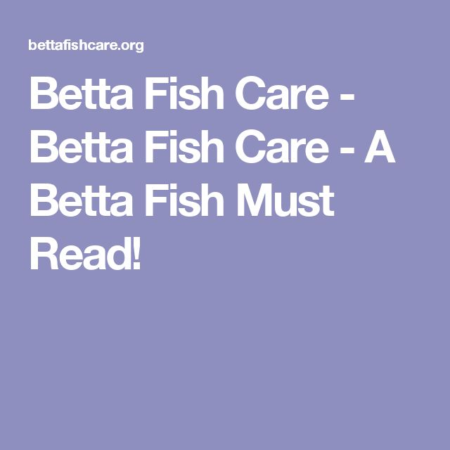 1000 ideas about betta fish care on pinterest fish care for How to care for a betta fish