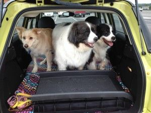 Pet Friendly Holiday Travel Tips