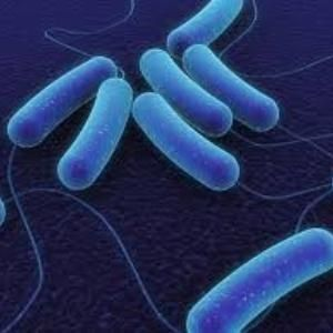 Some people may have genetic protection against E. coli