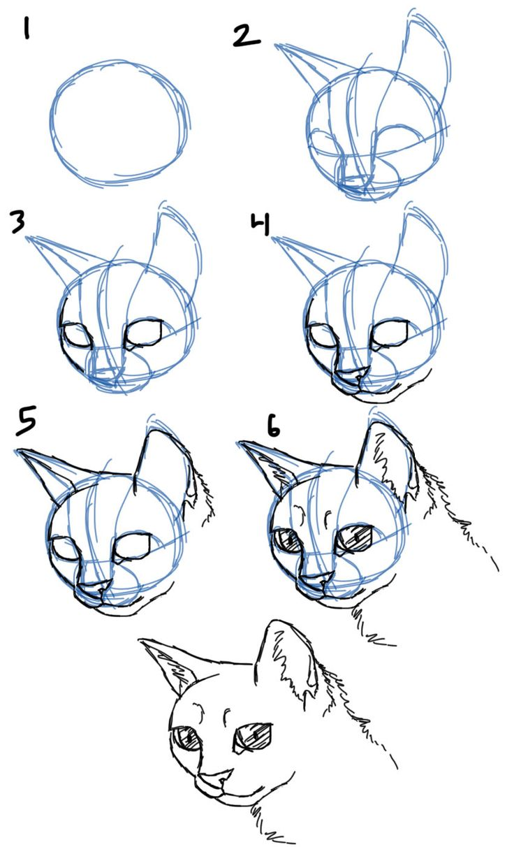 Uncategorized How To Draw A Cats Face best 25 cat face drawing ideas on pinterest how to draw cats facesheads 34 view
