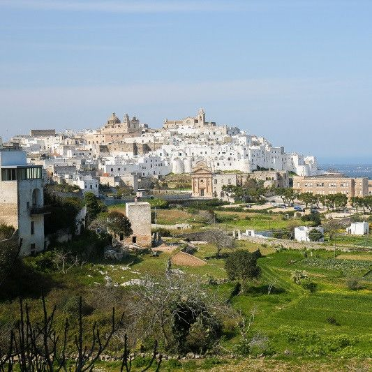 In the countryside of Castelleneta (Puglia), the fresh breezes from the Ionian Sea sweep the hills where Le Ferre's Leccino, Ogliarola, Frantoio and Coratina olives grow. Puglia's mild winters and her