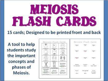 Mitosis Worksheet Answer Key Flash Card Quiz