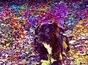 "New artwork for sale! - "" Dog Irish Setter Border Collie Maja  by PixBreak Art "" - http://ift.tt/2uH0KR4"