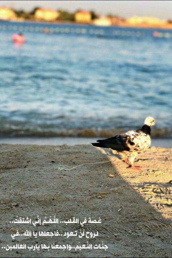 غـصة في القـلب الل ـه ــم إن ـي ٱشتقت لـروح ل ن تـعود فٱجعلها يا الله فـي جن ـات الن ـعيم واجمعنا بـها يارب العالمين Animals Bird