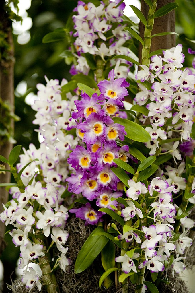 First Glimpse Of The Orchidshow Patrick Blanc 39 S Vertical