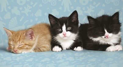 About responsible cat breeders at www.pets4life.com.au