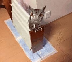 How To Increase An Owl