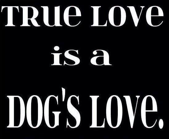True love is a dogs love!
