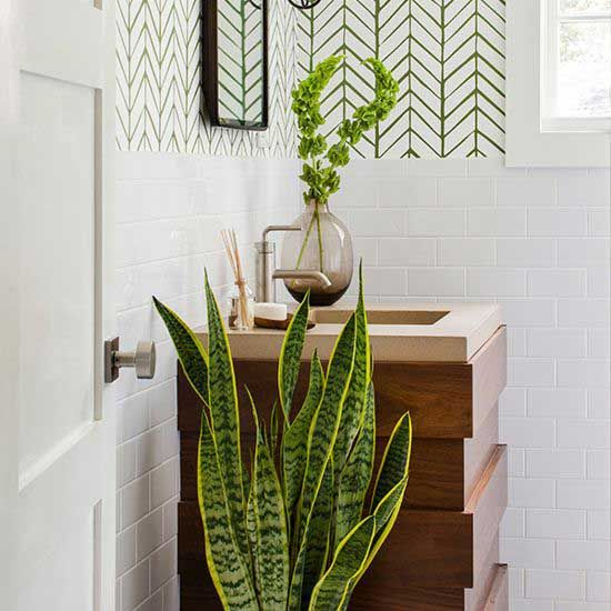 An Expert's Top Choices for Bathroom Houseplants