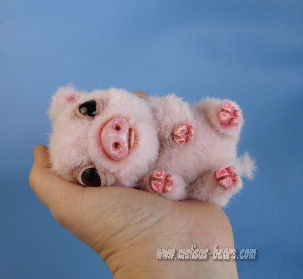 Baby Teacup Pig | www.pixshark.com - Images Galleries With ...