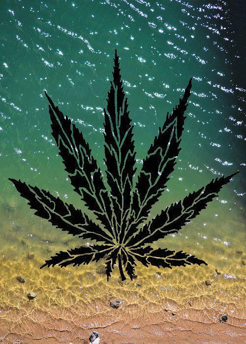 Ganja GIF #cannabis #weed