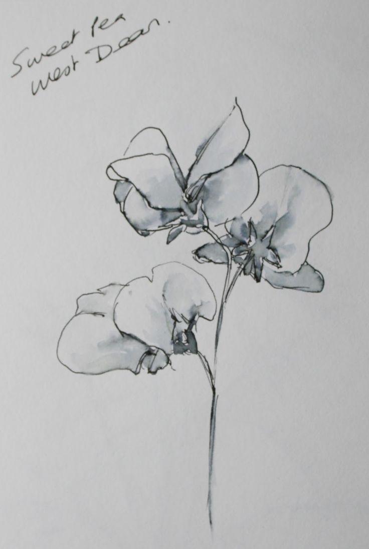 sweet pea drawing - Google Search