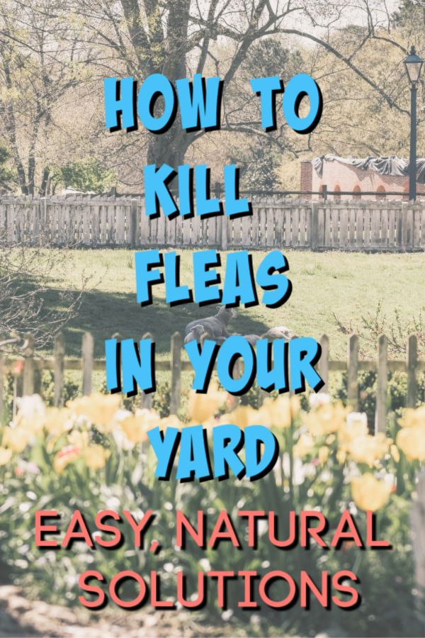 Kill Fleas in the Yard: 5 Weird Tricks that Work! | Kill ...