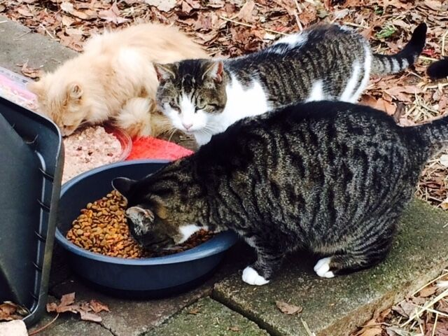 Sponsor Evicted Relocated Feral Cats Rescue Rec Color Photo Helps