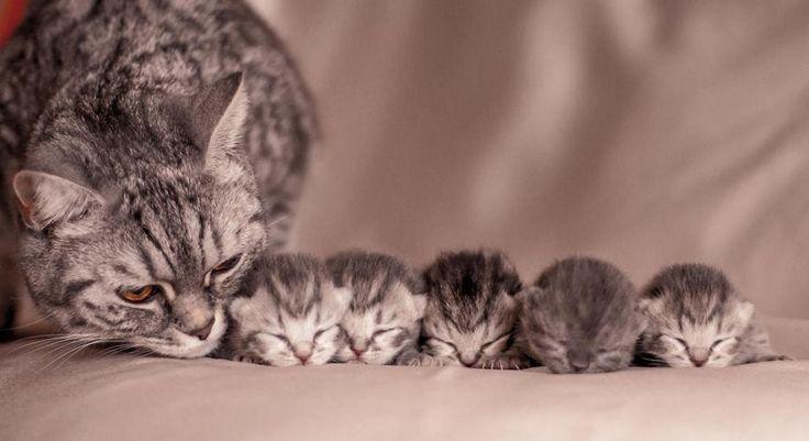 Mamá con sus cinco bebés