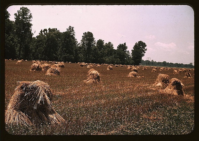 Typical southeastern Georgia farm with newly harvested field of oats (LOC)    Wolcott, Marion Post,, 1910-1990,, photographer.    1939 May    Farm Security Administration - Office of War Information Collection