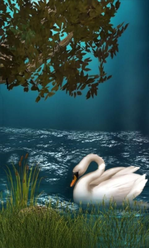 Swan Lake Live Wallpaper...<br/><br/>This is a nice beautiful swan in a lake with moving grass, wind blowing tree branches and lake reflection and waves, Nature at it's best.<br/><br/>App2sd card support<br/><br/>Settings for animation speed<br/><br/>Please checkout my other great apps and free live wallpapers, I have many Animal and nature scenery live wallpapers.<br/><br/>This free app is ad supported.<br/><br/>Recent changes:<br/>Uploaded 2/29/2012 happy leap day :)<br/><br/>Content…