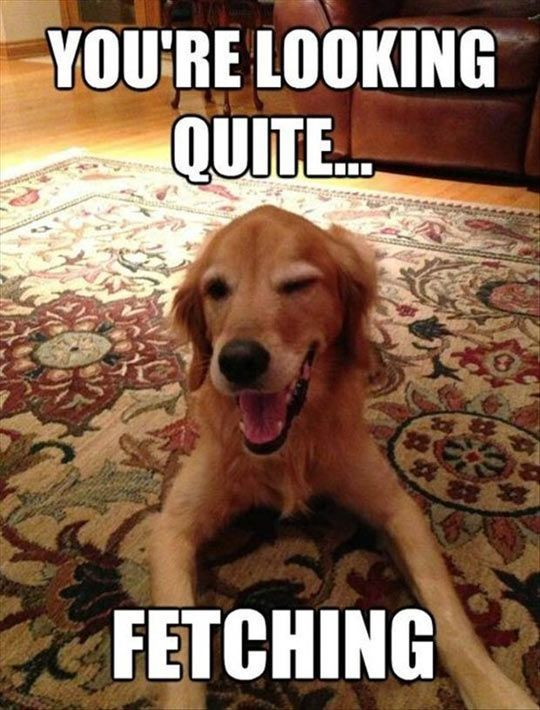 Hilarious pick-up lines from dogs