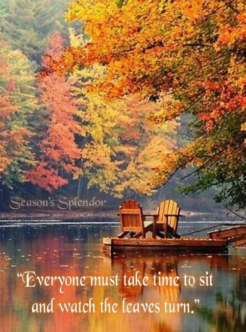 Let's sit and watch the leaves turn!