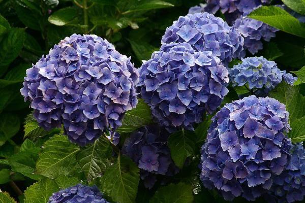 Quais são as plantas que trazem azar. O misticismo sempre rondou as plantas. Acredita-se que elas eram utilizadas pelas bruxas em seus feitiços pois possuíam poderes sagrados, antigamente acreditava-se que as plantas guardavam a energia d...