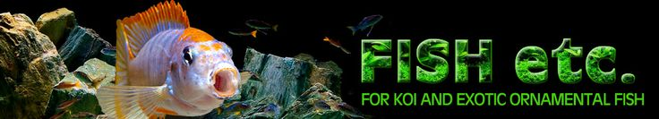 Fish-etc. | Aquarium Specialist Shop |Tropical Fish, African Cichlids and Koi