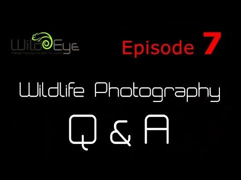 Wildlife Photography Q&A: Episode 7